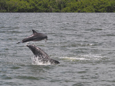 dolphin tours in cape coral